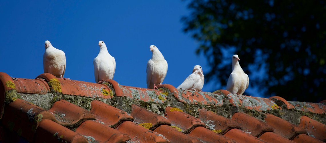 animal-animal-photography-avian-422210
